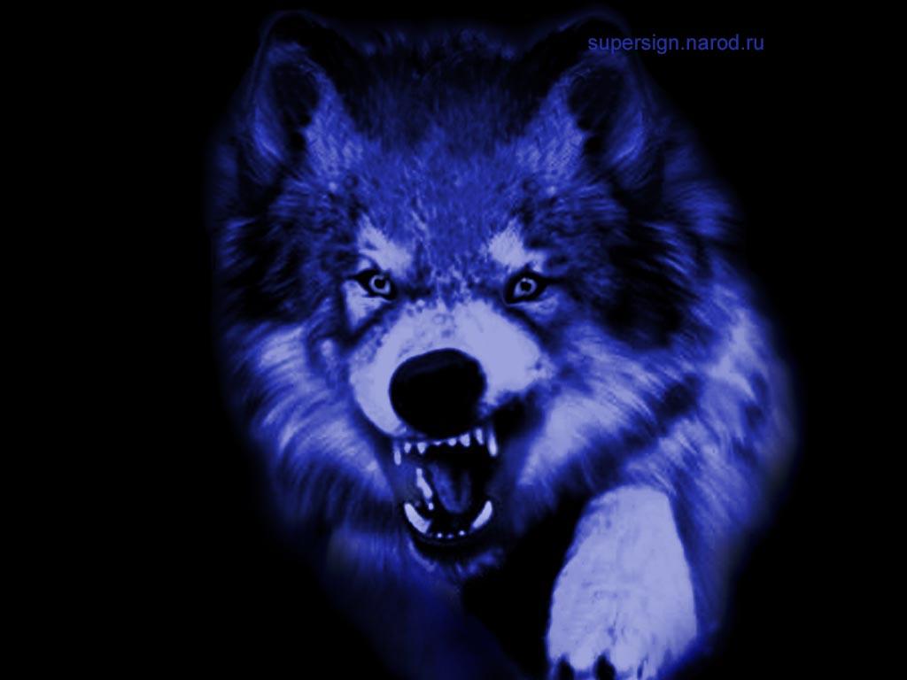 Волки обои hd на рабочий стол